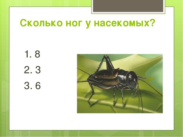Сколько ног у насекомых? 1. 8 2. 3 3. 6