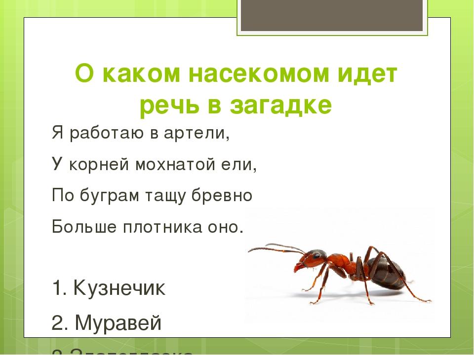 О каком насекомом идет речь в загадке Я работаю в артели, У корней мохнатой е...