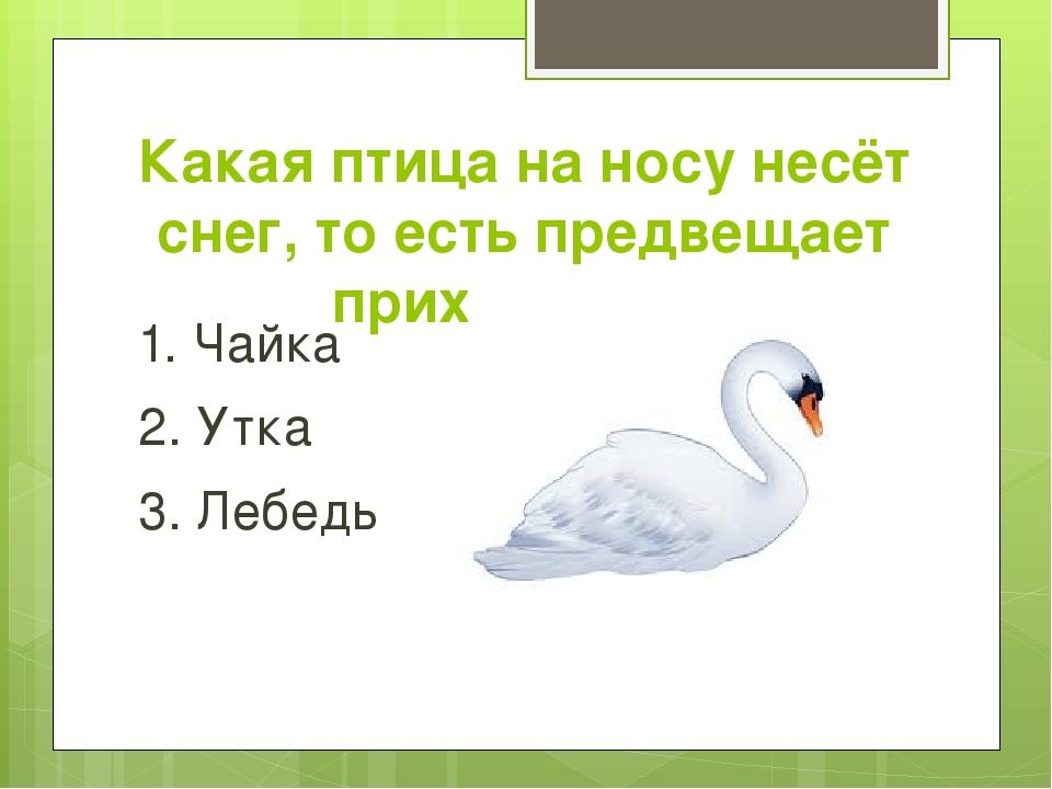 Какая птица на носу несёт снег, то есть предвещает приход зимы 1. Чайка 2. Ут...