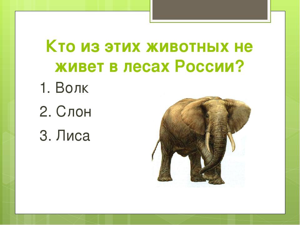 Кто из этих животных не живет в лесах России? 1. Волк 2. Слон 3. Лиса
