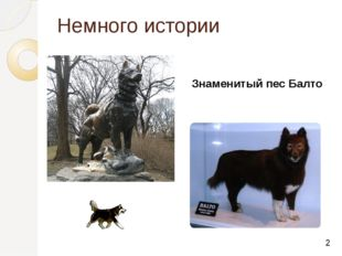 Немного истории Знаменитый пес Балто