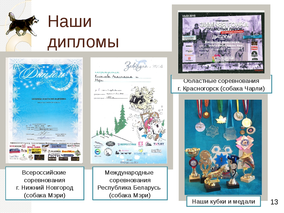 Наши дипломы и награды Международные соревнования Республика Беларусь (собака...
