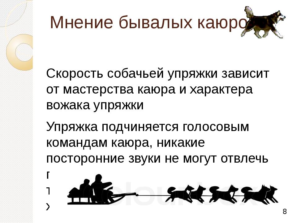 Мнение бывалых каюров Скорость собачьей упряжки зависит от мастерства каюра и...