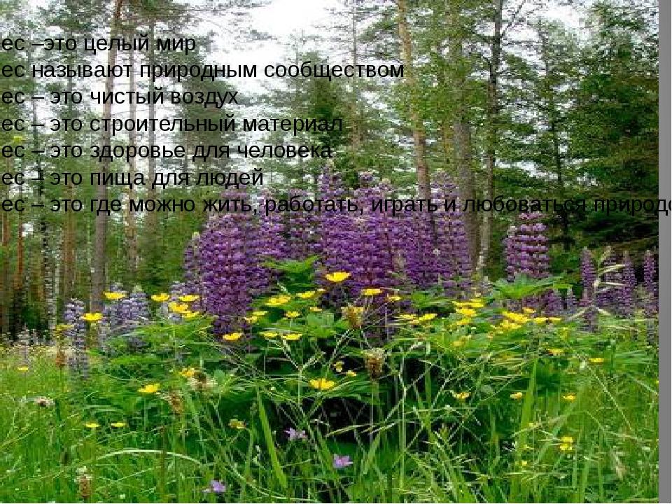 Лес –это целый мир Лес называют природным сообществом Лес – это чистый воздух...