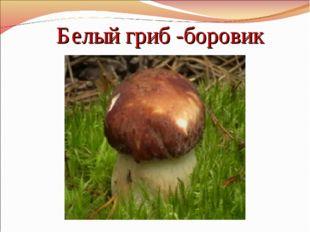 Белый гриб -боровик