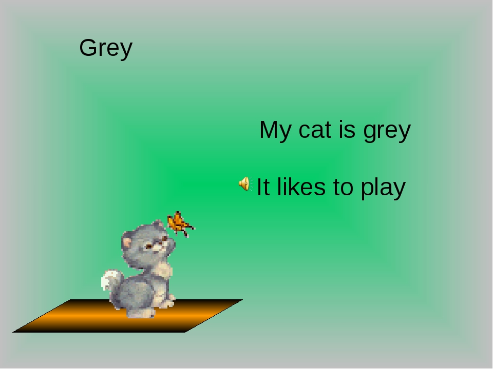 Grey My cat is grey It likes to play