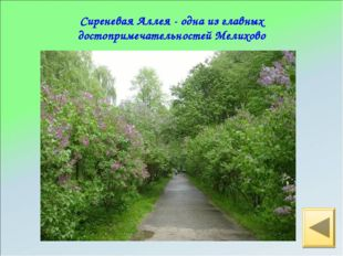 Сиреневая Аллея - одна из главных достопримечательностей Мелихово