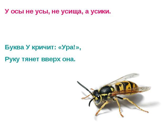 У осы не усы, не усища, а усики. Буква У кричит: «Ура!», Руку тянет вверх она.