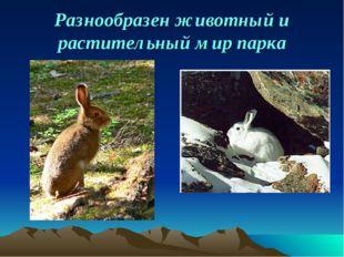 Разнообразен животный и растительный мир парка