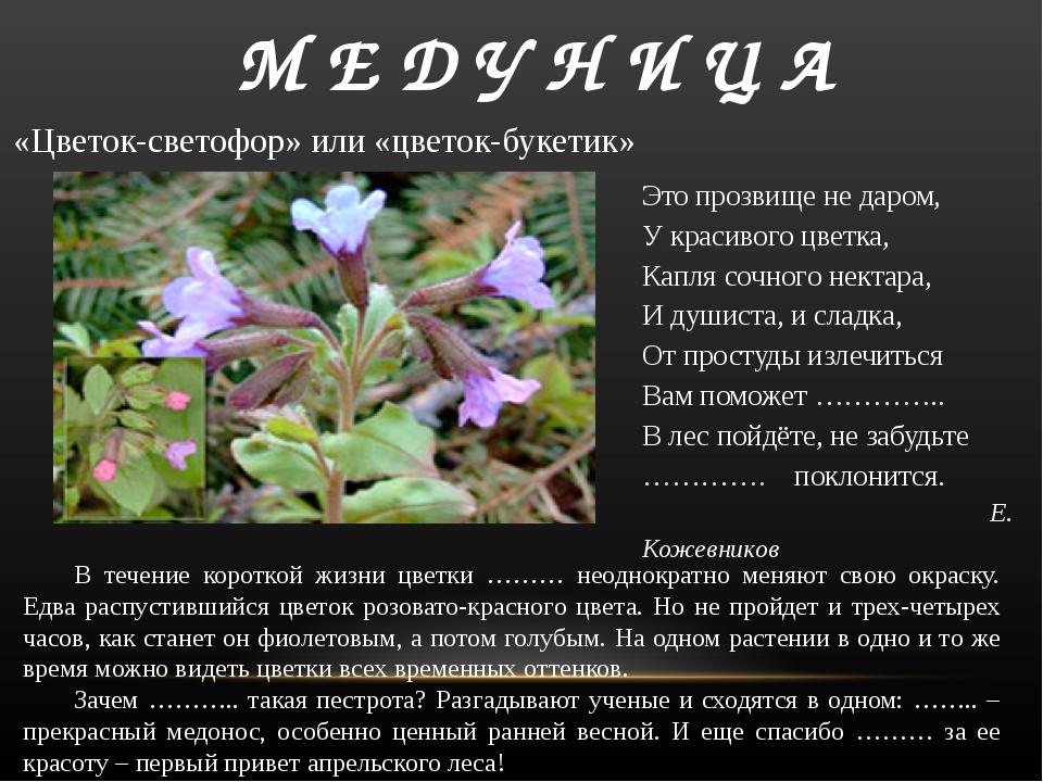 В течение короткой жизни цветки ……… неоднократно меняют свою окраску. Едва р...