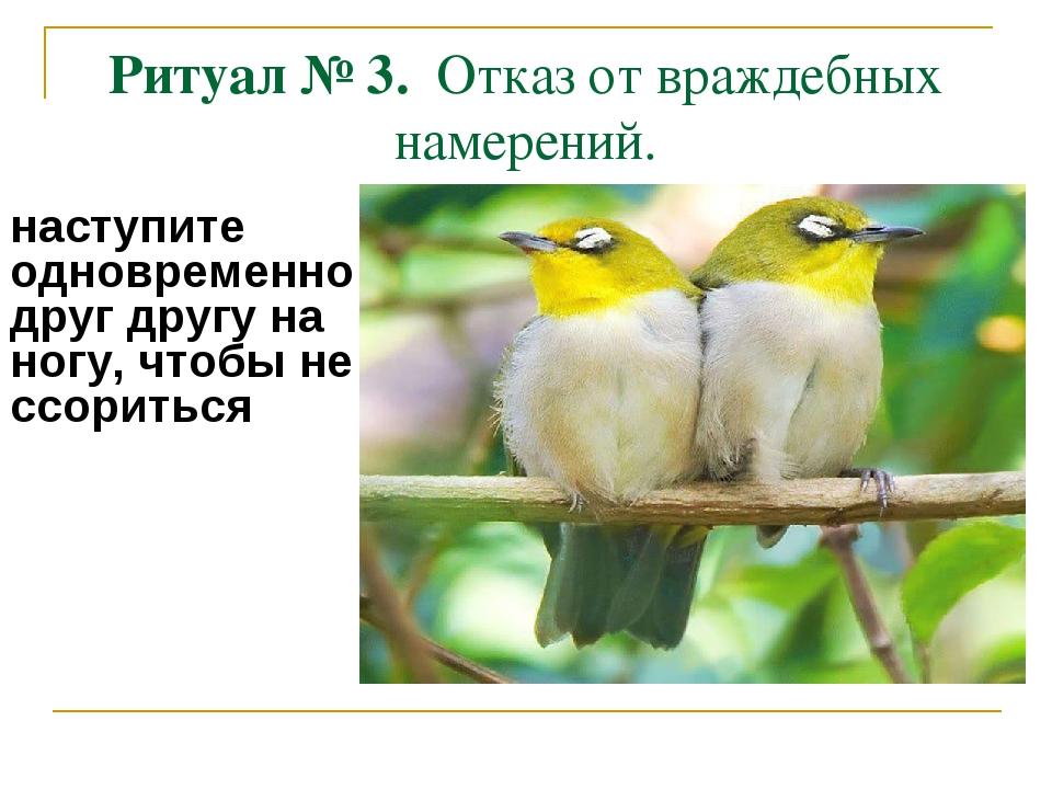 Ритуал № 3. Отказ от враждебных намерений. наступите одновременно друг другу...