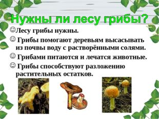 Лесу грибы нужны. Грибы помогают деревьям высасывать из почвы воду с растворё