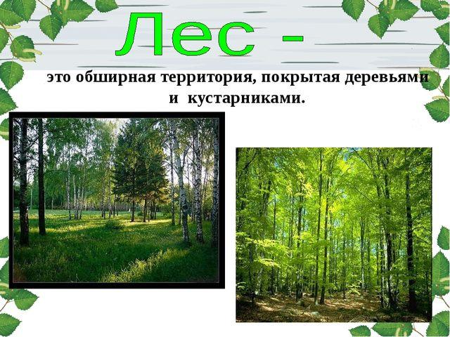 это обширная территория, покрытая деревьями и кустарниками.