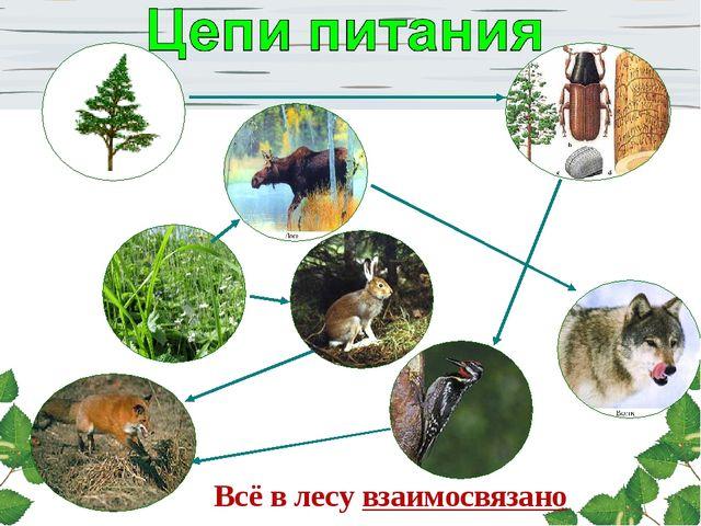 Всё в лесу взаимосвязано