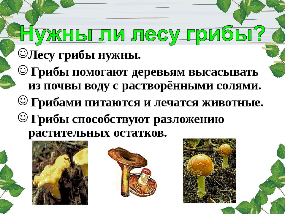 Лесу грибы нужны. Грибы помогают деревьям высасывать из почвы воду с растворё...