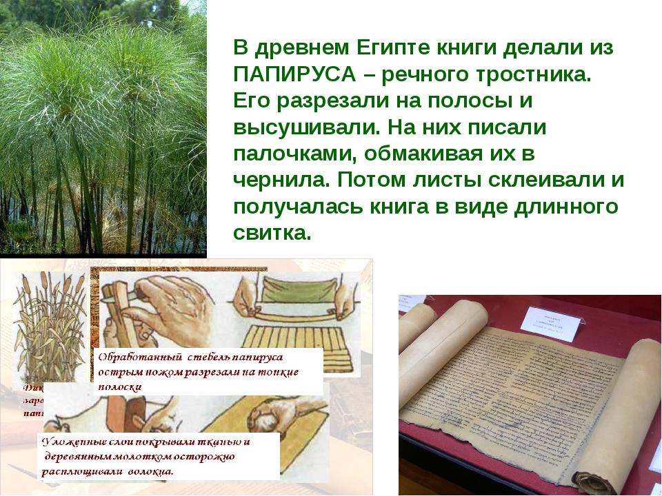 В древнем Египте книги делали из ПАПИРУСА – речного тростника. Его разрезали...