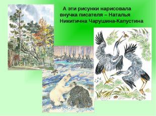 А эти рисунки нарисовала внучка писателя – Наталья Никитична Чарушина-Капуст