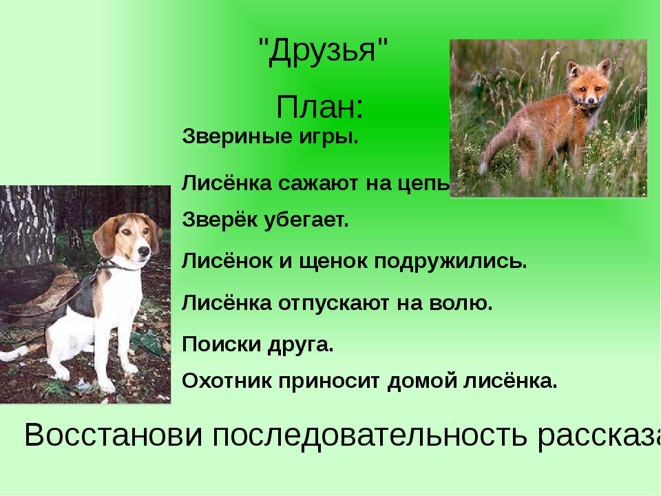 """""""Друзья"""" План: Охотник приносит домой лисёнка. Лисёнок и щенок подружились. П..."""