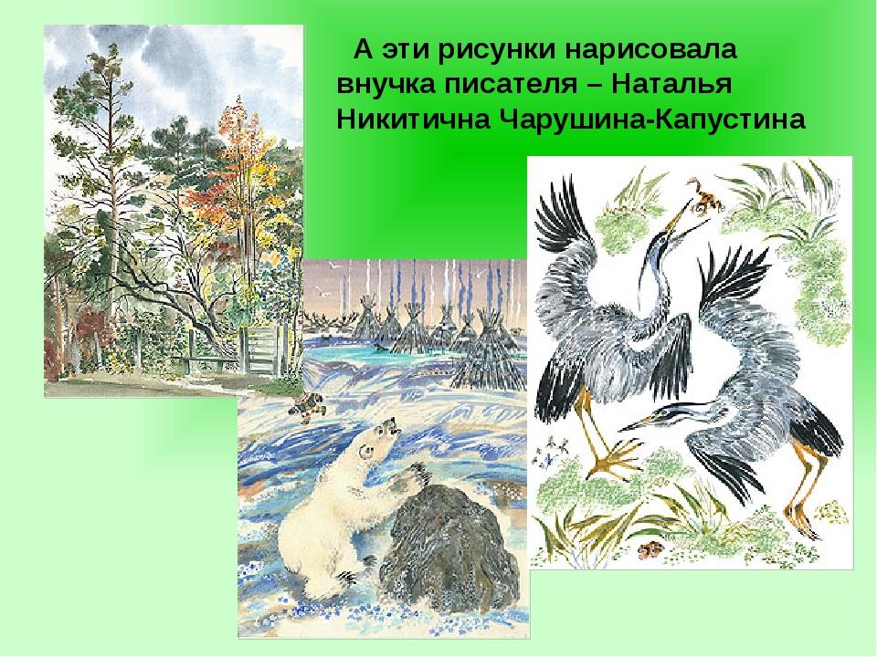 А эти рисунки нарисовала внучка писателя – Наталья Никитична Чарушина-Капуст...