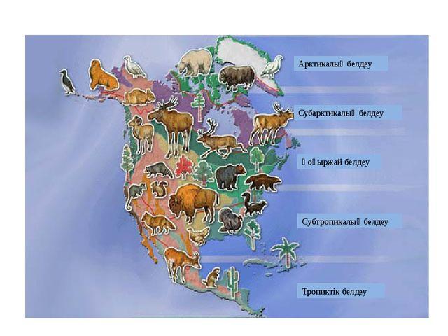 Арктикалық белдеу Субарктикалық белдеу Қоңыржай белдеу Субтропикалық белдеу Т...