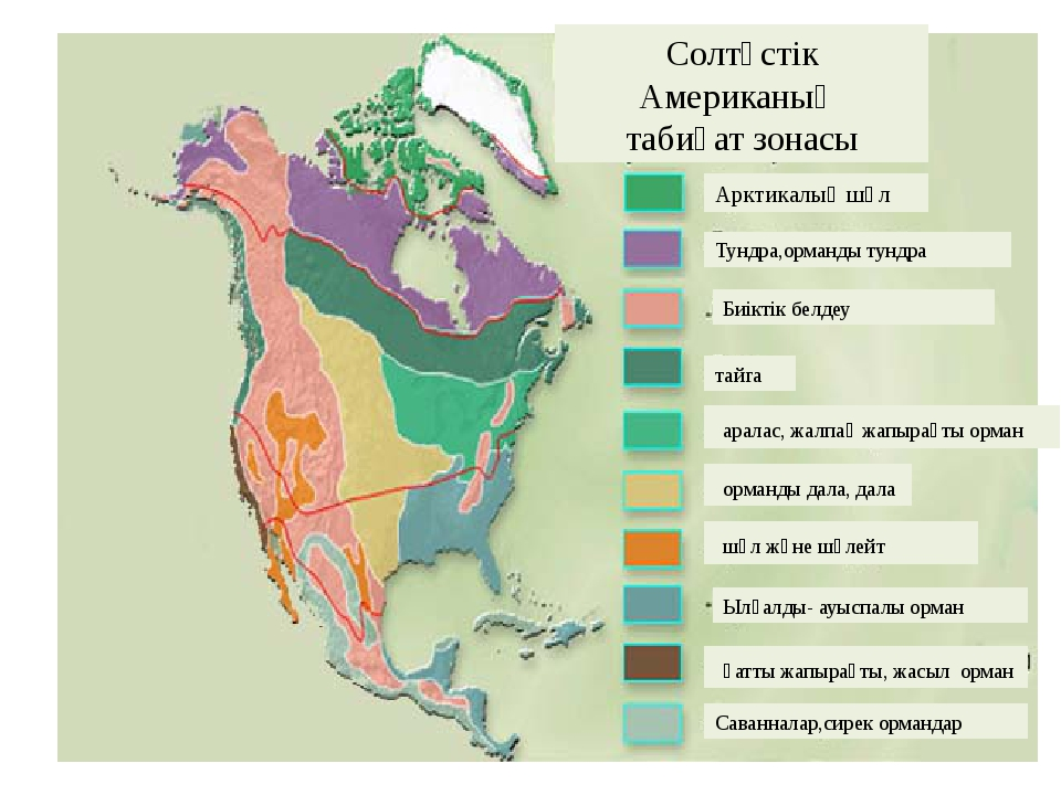 Солтүстік Американың табиғат зонасы Арктикалық шөл Тундра,орманды тундра Биік...