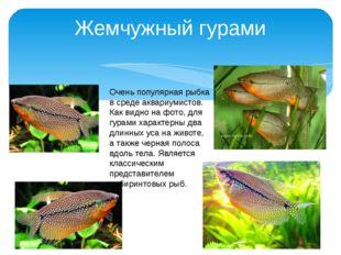 Жемчужный гурами Очень популярная рыбка в среде аквариумистов. Как видно на ф