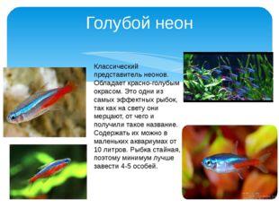 Голубой неон Классический представитель неонов. Обладает красно-голубым окрас