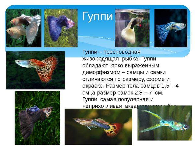 Гуппи Гуппи – пресноводная живородящая рыбка. Гуппи обладают ярко выраженным...