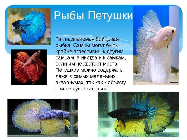 Рыбы Петушки Так называемая бойцовая рыбка. Самцы могут быть крайне агрессивн...