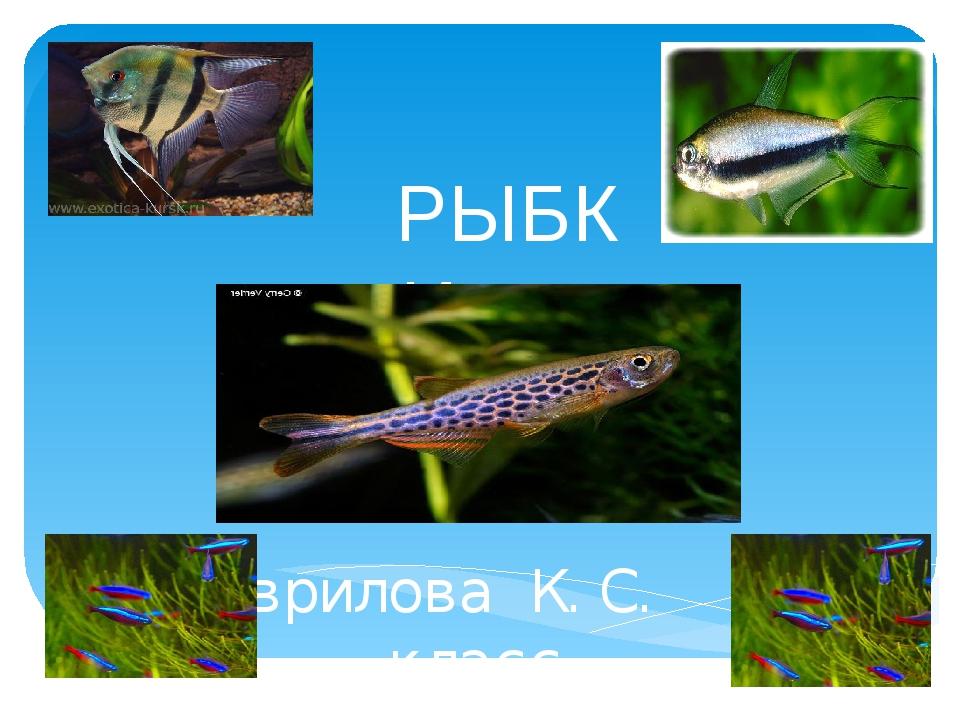 РЫБКИ Гаврилова К.С. 4 класс