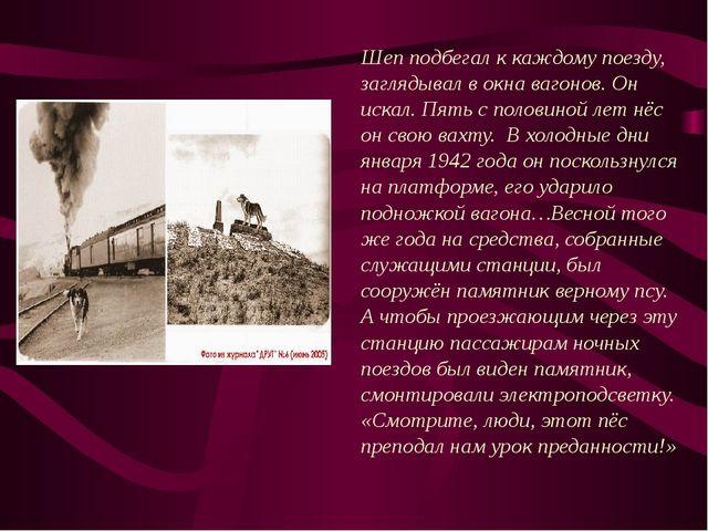 Этому псу поставлен памятник в городе Кракове. Пес целый год ждал на Грюнваль...