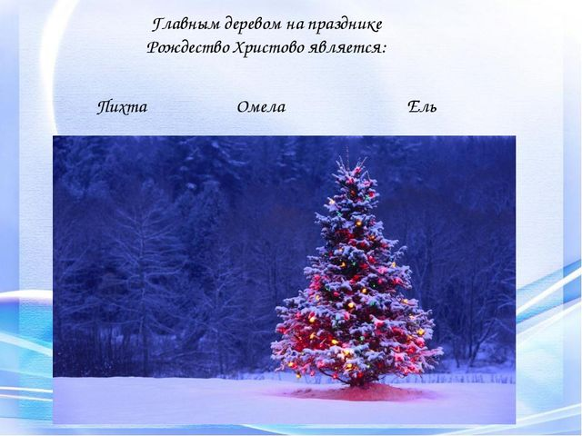 Главным деревом на празднике Рождество Христово является: Пихта Омела Ель