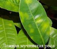 hello_html_1386e51a.jpg