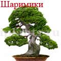 hello_html_3ea354a.jpg