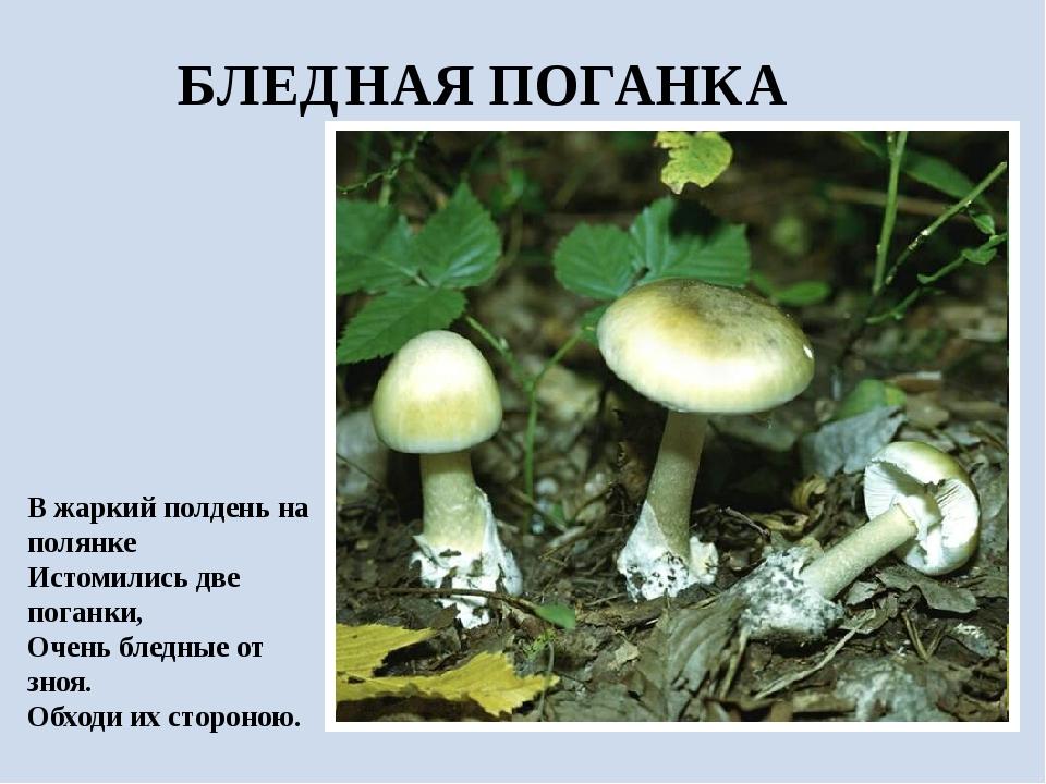 БЛЕДНАЯ ПОГАНКА В жаркий полдень на полянке Истомились две поганки, Очень бле...