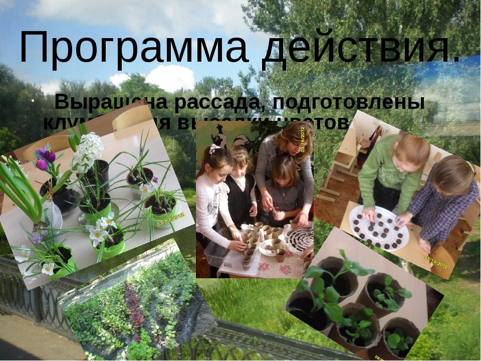 Выращена рассада, подготовлены клумбы для высадки цветов. Программа действия.
