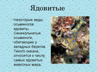 Ядовитые Некоторые виды осьминогов ядовиты. Синекольчатые осьминоги, обитающи