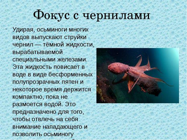 Фокус с чернилами Удирая, осьминоги многих видов выпускают струйки чернил— т...