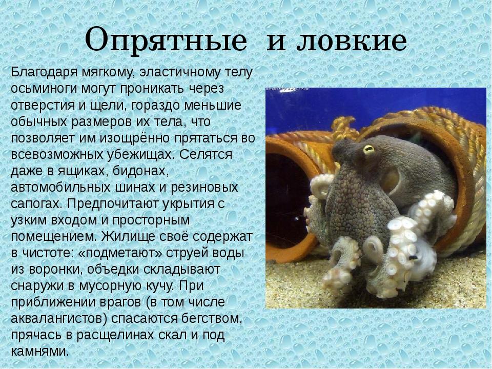 Опрятные и ловкие Благодаря мягкому, эластичному телу осьминоги могут проника...