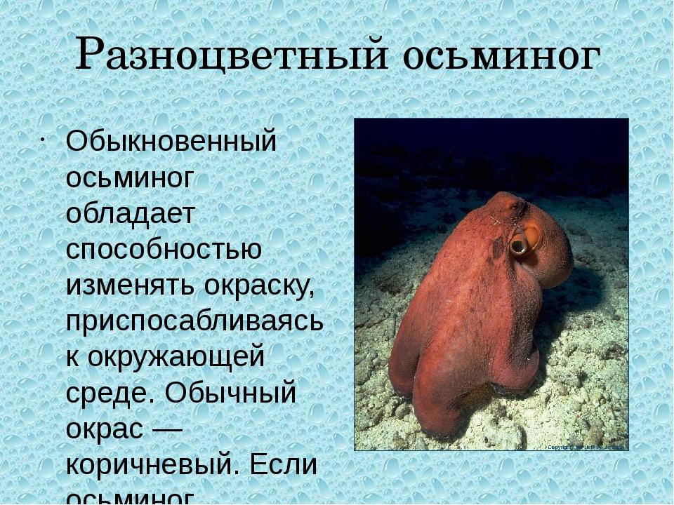 Разноцветный осьминог Обыкновенный осьминог обладает способностью изменять ок...