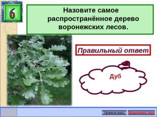 Назовите самое распространённое дерево воронежских лесов. Правильный ответ Ду