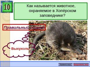 Как называется животное, охраняемое в Хопёрском заповеднике? Правильный ответ