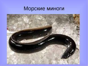 Морские миноги