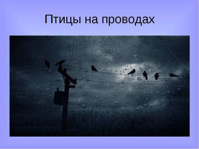 Птицы на проводах