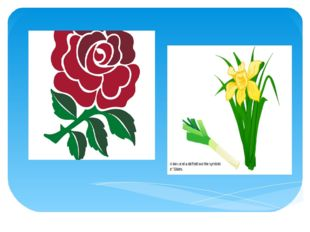 The red rose is the national emblem of England.