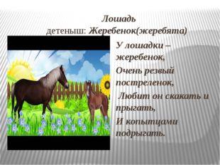 Лошадь детеныш: Жеребенок(жеребята) У лошадки – жеребенок, Очень резвый пост