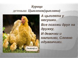 Курица детеныш: Цыпленок(цыплята) А цыплята у несушки. Все похожи друг на др