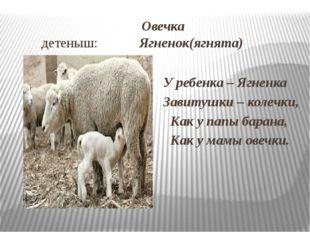 Овечка детеныш: Ягненок(ягнята) У ребенка – Ягненка Завитушки – колечки, Как