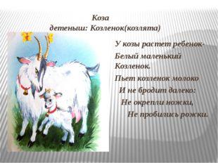 Коза детеныш: Козленок(козлята) У козы растет ребенок- Белый маленький Козле