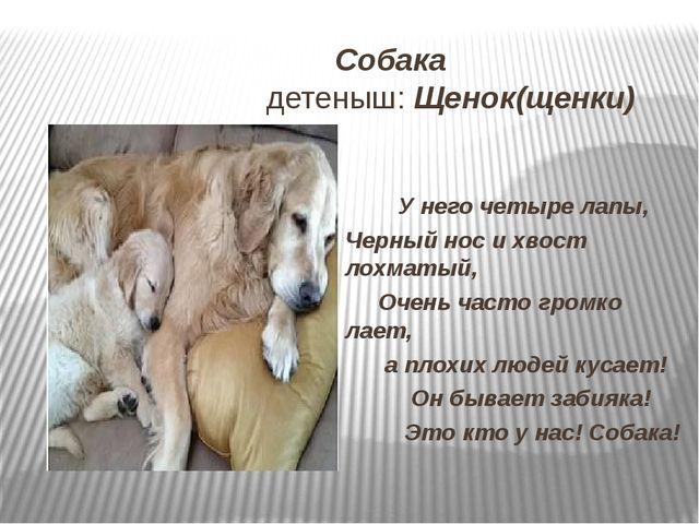 Собака детеныш: Щенок(щенки) У него четыре лапы, Черный нос и хвост лохматый...